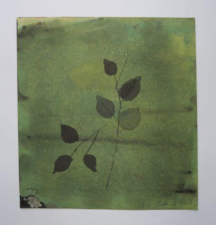 Rozenblad 2007 inkt op papier 23,5 x 21,5 cm - private collection