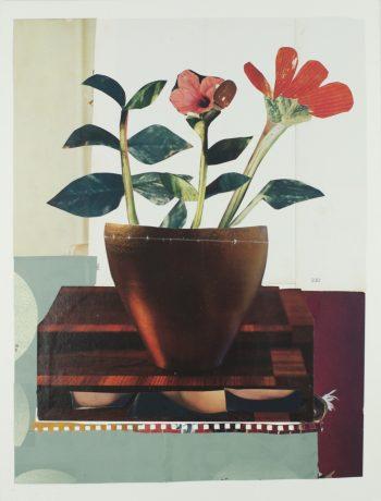 Hybiscus 2017 41 x 31 cm