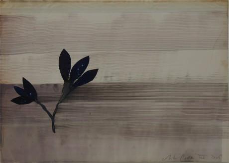 Plant  20 x 29 cm. -  private collection