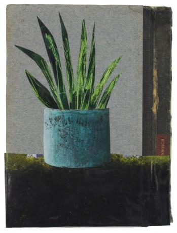 Sansevieria 2015  18,5 x 13,5 cm