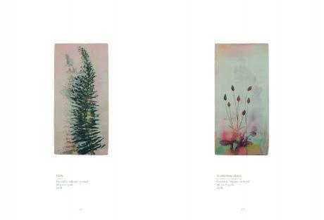 46-47 Painters Fern