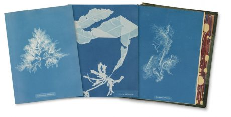 Anna Atkins 'Photographs of British Algue' 1843, coll. Rijksmuseum