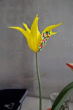 Elspeth Diederix 'Diamond Yellow Lilytulip'