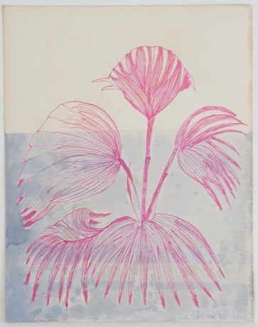Pink Plant 2008  35 x 25 cm
