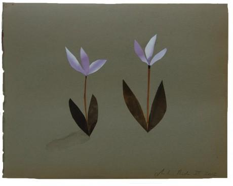 Cyclamen 2012  23 x 29 cm - private collection