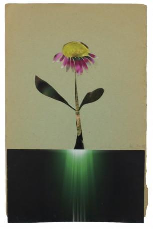 Echinacea 2015  27,5 x 17,5 cm