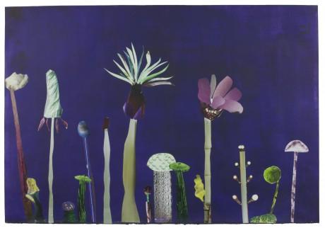 Fantastic Flowers 2015  41 x 59 cm