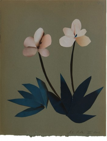 Helleborus 29 x 23 cm
