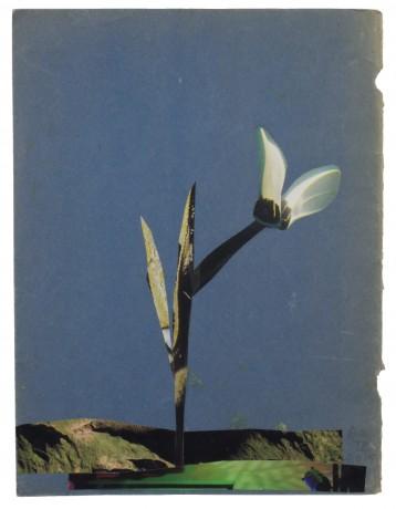 In de Tuin 2015  25,5 x 19,5 cm