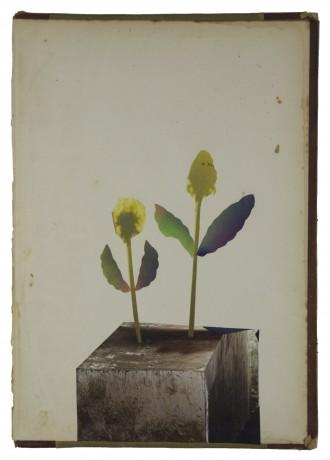 Planten op Hout 2014  29 x 20 cm