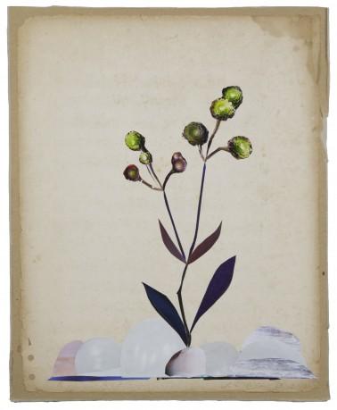 Rotsplant 2014 36 x 29,5 cm