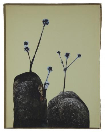 Rotsplantjes 2014  29 x 22,5 cm