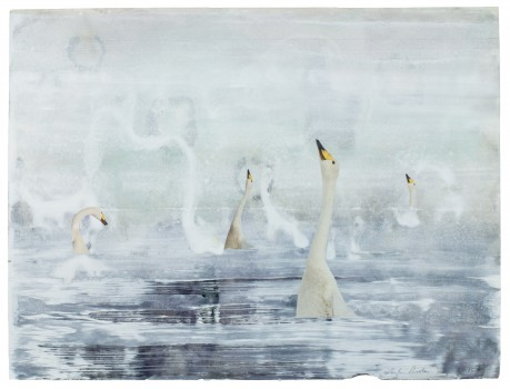 Swan Lake 2015  41 x 54 cm