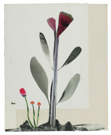 Vlinderbloem 2015  31 x 25 cm. -  collection Triodos Bank